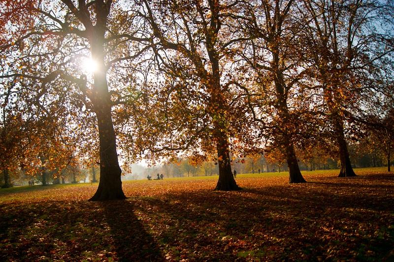 Passear pelos parques de Londres